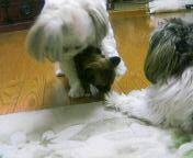 image/mizutanisakura-2006-09-03T20:28:15-2.jpg