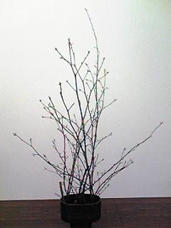 image/mizutanisakura-2007-02-09T13:03:46-1.jpg