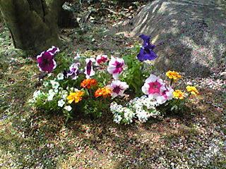 image/mizutanisakura-2007-04-27T10:50:47-1.jpg